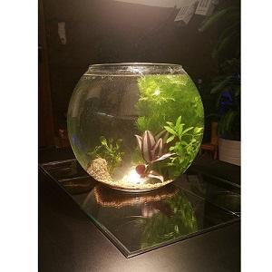 Classement guide d achat top bocaux poisson en avr 2018 for Aquarium vase pour poisson rouge